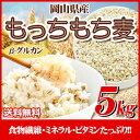 29年産 岡山県産大麦100%もっちもち麦5kg...