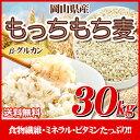 29年産 岡山県産大麦100%もっちもち麦30kg【5kg×6袋】【β-グルカン】【美容・健康・