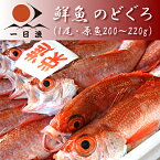 鮮魚 のどぐろ(1尾・200〜220g)ノドグロ アカムツ※魚の重量は原魚(鱗や内臓を取り除く前の状態)の重さです。※頭の先から尾の先までで25cm前後※漁の状況次第で販売中止、また追加販売いたします。【岡富商店】