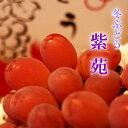 岡山県産 紫苑 特大2房900g×2 贈答用 ぶどう 葡萄 ブドウ ギフト ペアギフト 天然 スイーツ お歳暮【岡山果物工房】