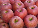 送料無料 青森産 ワケあり サンふじ 蜜入りりんご 高糖度 10kg(32〜40玉)お歳暮 ギフト クリスマス プレゼント