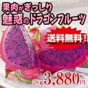 ピタヤ ドラゴンフルーツ(赤) 2kg[送料無料] 食物繊維・ビタミン・ミネラル|お取り寄せ|健康|お土産[食べ物>フルーツ>]【sale1028】