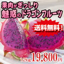 【送料無料】ピタヤ ドラゴンフルーツ(赤) 2kg 6箱セット食物繊維・ビタミン・ミネラル|お取り寄せ|健康|お土産[食べ物>フルーツ>ドラゴンフルーツ]
