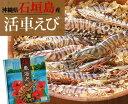 【送料無料】石垣島活き車エビ1kg(26〜33尾)|お歳暮|ギフト|おせち[食べ物>海産物>エビ]