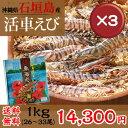 【送料無料】石垣島活き車エビ1kg(26〜33尾) 3箱セット|お歳暮|ギフト|おせち[食べ物>海産物>エビ]