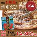 【送料無料】石垣島活き車エビ1kg(26〜33尾) 4箱セット|お歳暮|ギフト|おせち[食べ物>海産物>エビ]