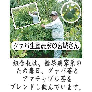 グァバ茶ティーパック30包 薬草組合【グアバ茶】の紹介画像2