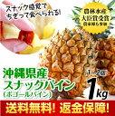 【収穫して新鮮発送】【返金保証付】沖縄県産スナックパイン約1kg(約1玉〜2玉)沖縄