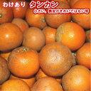 伊豆味産 たんかん【訳あり】約2kg 【送料無料】【300