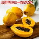名護さんの有機JASフルーツパパイヤ約3kg(約3~6個)【1週間20kg限定】【品種台農2号】糖度高【種無しになる場合もあります】最強のダイエットフルーツとも言われるフルーツパパイヤ
