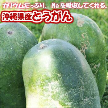 とうがん(冬瓜)約10kg(約2〜3玉)【発送4...の商品画像