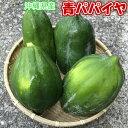 青パパイヤ約10kg 【夏季はチルド便でお届け致します。】 青パパイヤは栄養価が高く健康維持に大切な酵素を豊富に含んでいます。 【パパイア 野菜 国産 国内産 沖縄県産 お取り寄せ セット 料理 惣菜 おかず サラダ 材料 パパイヤ酵素】【たま青果】