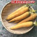 金美ニンジン 5kg 【発送 10月〜8月】 黄色いニンジン...