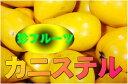 【琉宮青果】★きれいな黄色のうちは食べてはいけません!常温でシワが出てくるまで待ってください。そして驚きの味覚!【沖縄産 カニステル エッグフルーツ】