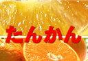 【発送1月〜3月上旬】沖縄産 たんかん 【優品】約3kg  (沖縄ミカン みかん タンカン)