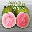 沖縄産 グァバ 約5kg 赤・白どちらになるかはお任せになります。【発送7月~9月】 【沖縄産 グアバ トロピカルフルーツ 果物 お取り寄せ / βカロテン ビタミンC リコピン ポリフェノール 抗酸化作用 アンチエイジング】【たま青果】