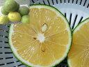 水果 - 【発送9〜10月】沖縄県産グリーンレモン(わけあり) 1.5kg(12〜18個)