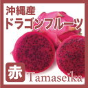 【訳あり】 沖縄産 ドラゴンフルーツ (赤) 約2kg 沖縄産のトロピカルフルーツ・ドラゴンフルーツ