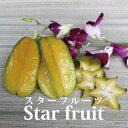 沖縄産 スターフルーツ 約2kg 【発送8月中旬?12月】沖縄産のトロピカルフルーツ・スターフルーツ