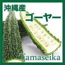 【週末お買い得セール】沖縄の野菜は濃い!沖縄産 ゴーヤー(苦瓜・にがうり) 3kg【10個のみ】