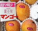 【発送8月中旬?9月初】新種稀少マンゴーアップルマンゴーを超える瞠目の糖度とまろやかさ夏小紅 約1k