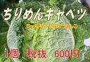 【発送1月下〜2月】稀少野菜沖縄県産ちりめんキャベツ2個