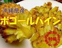 【週末お買い得セール】【限定5セット】 沖縄産 ボゴールパイン【わけあり】 約1.5kg ランキングお取り寄せ