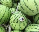 ※只今発送に時間を要する可能性が御座います。今帰仁スイカ 1個(3~4kg) 発送年中 沖縄県産 フルーツ 果物 すいか スイカ 西瓜 ウォーターメロン