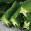 【発送4〜12月】 沖縄産 うりずん豆(四角豆) 5パック(約500g) 沖縄では当たり前の南国野菜【島野菜】【炒め物、お浸し、てんぷらに】