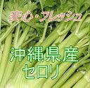 遠く離れた沖縄県だから安心です安心・フレッシュ沖縄県産野菜セロリ 1束(約1kg)【発送 12〜4月】