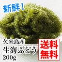【送料無料】久米島産生海ぶどう200gタレ付き、食べ方付き!...
