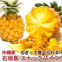 スナックパイン 石垣島産 沖縄 パイナップル 500g〜800g 【安心保証付き】