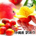 ミニマンゴー 沖縄 マンゴー 500g 【訳あり】【完熟】【キズあり】