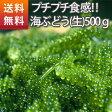 沖縄県産海ぶどう(生)500g(海ぶどう グリーンキャビア)
