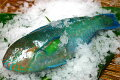 沖縄の魚・魚介