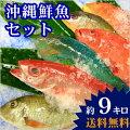【送料無料】 おまかせ沖縄鮮魚セット9kg(3〜5種類)