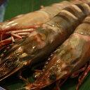 【海老の極み】特大シータイガー海老12尾入り BBQにどうぞ