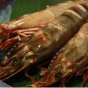 【送料無料】【海老の極み】特大シータイガー海老12尾入り BBQにどうぞ