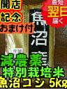 【29年産 新米】新潟県魚沼産コシヒカリ(特別栽培米、減農薬米)☆白米5kg送料無料※北海道は別途送料\500沖縄一部離島は\1000が掛かります。