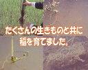 【新米】【送料無...