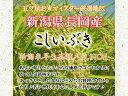 令和元年産 新潟県 わたぼうし もち米 精白 1kg