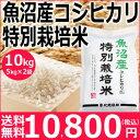 【新米予約】魚沼産コシヒカリ特別栽培米10kg(5kg×2袋)【29年産】【送料無料】新潟から産地直送、精米仕立をお届けします。