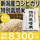 【新米予約】【平成30年産】新潟産コシヒカリ特別栽培米10kg(5kg×2袋)10月上旬頃発売予定