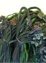 【国産】【天然山菜】【塩蔵(塩漬け)】わらび(ワラビ)1kgその日の 採れたて わらび(ワラビ)をその日に塩漬け。添加物一切なしの安心安全食材です。お漬物/お浸し/炊き物/山菜うどん/山菜そば・・・本当に美味しいです!!
