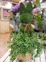 斑入りフィカスプミラを植え付けたアニマルトピアリーモス♪動物シリーズ♪ウサギ(うさぎ)さん♪LLLサ