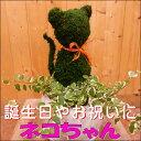 アニマルトピアリーモス♪動物シリーズ♪猫(ネコ)さん♪Sサイズ 斑入りフィカスプミラを植え付けていま