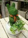 楽天癒し空間 One's Garden&Plantsアニマルトピアリーモス♪動物シリーズ♪チンチンワンちゃん 犬(イヌ)♪Sサイズ斑入りフィカスプミラを植え付けています♪陶器鉢植え・受け皿付き 場所取らずでちょこっと置くだけ♪誕生日やお祝い・プレゼントや景品にも♪