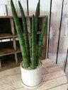 楽天癒し空間 One's Garden&PlantsNEW! サンスベリア スタッキー 受け皿付き 陶器鉢 シンプルタイプ2 円柱 ミニ観葉植物 楽ギフ 包装 楽ギフ_メッセ入力 円筒形のスマートな植物。オフィスや、勉強部屋に緑をおいて、リラックス効果があるかも♪花言葉は「永久・不滅」新築祝い、引越し祝いに最適♪
