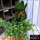 アニマルトピアリーモス♪動物シリーズ♪ネコちゃん ニャンニャン♪Sサイズ斑入りフィカスプミラを植え付けています♪テラコッタ陶器鉢植え 場所取らずでちょこっと置くだけ♪誕生日やお祝い・プレゼントや景品にも♪