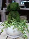 楽天癒し空間 One's Garden&Plantsアニマルトピアリーモス♪動物シリーズ♪耳たれ おすわりワンちゃん(犬)イヌ ♪Sサイズ斑入りフィカスプミラを植え付けています♪陶器鉢植え・受け皿付き 場所取らずでちょこっと置くだけ♪誕生日やお祝い・プレゼントや景品にも♪